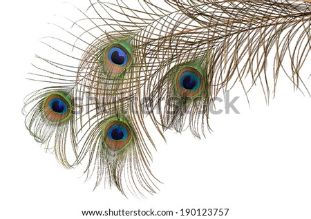 Beautiful feather of peacock isolated on white - stock photo