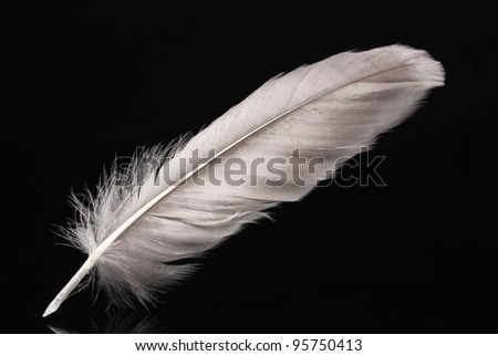 beautiful feather on black background - stock photo