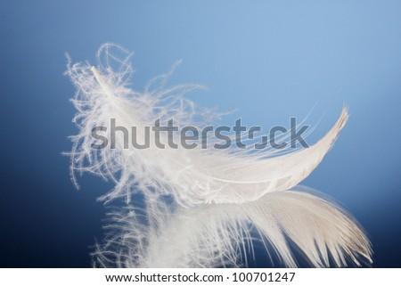 beautiful feather on blue background - stock photo