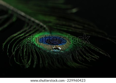 Beautiful feather with water drop close-up - stock photo