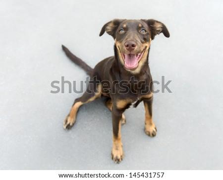 Beautiful female dog puppy - stock photo