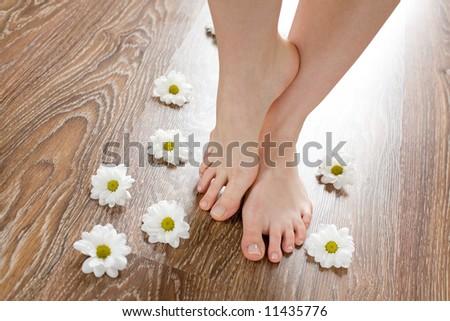 Beautiful female feet on the dark floorboard with white daisies around. - stock photo