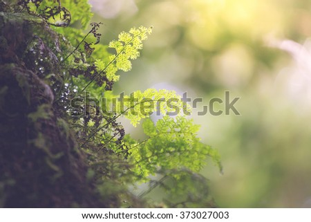 Beautiful Ferns in the wild - stock photo