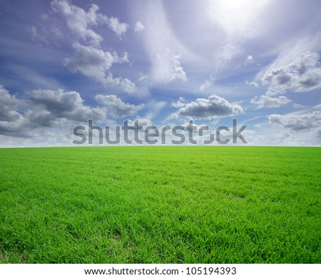 Beautiful field - stock photo
