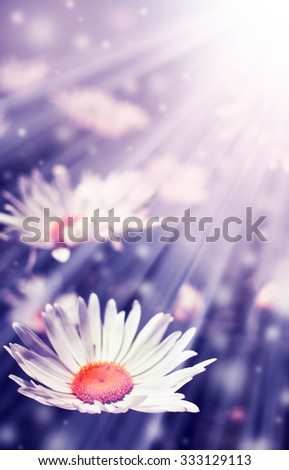 beautiful field of green grass and camomiles as background, closeup? - stock photo