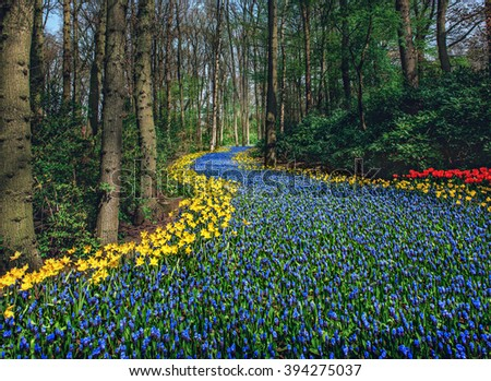 Beautiful field of spring flowers with narcissus, tulips and muscari - stock photo