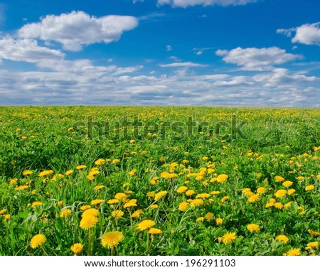 beautiful field with blooming dandelions and blue sky with white clouds - stock photo