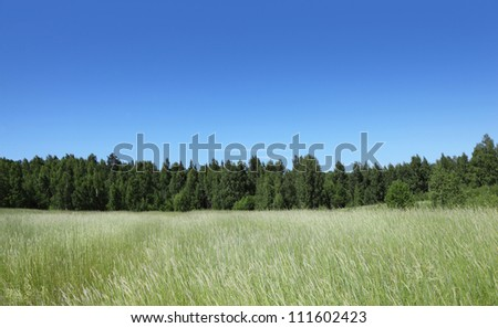 Beautiful field with forest on horizon - stock photo