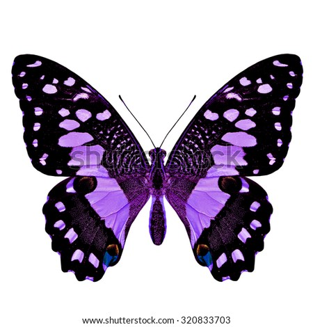 Beautiful fine purple butterfly in fancy color profile isolated on white background - stock photo