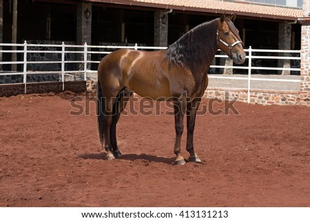 Beautiful fine thoroughbred horse outside - stock photo
