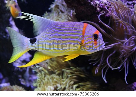 Beautiful fish under the sea - stock photo