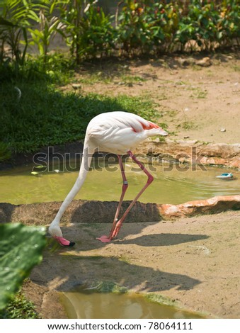 Beautiful Flamingo in the zoo - stock photo