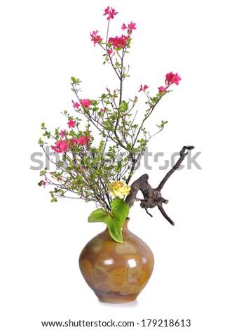 Beautiful Floral Design azalea in china vase on white  - stock photo
