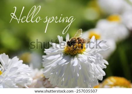 Beautiful flower and honey bee, outdoors. Hello Spring concept - stock photo