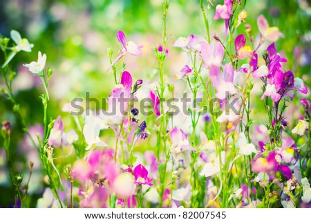 Beautiful flower background. Small depth of sharpness - stock photo