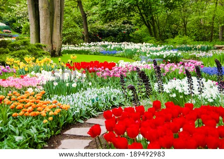 Beautiful flower beds in Keukenhof park, Holland - stock photo