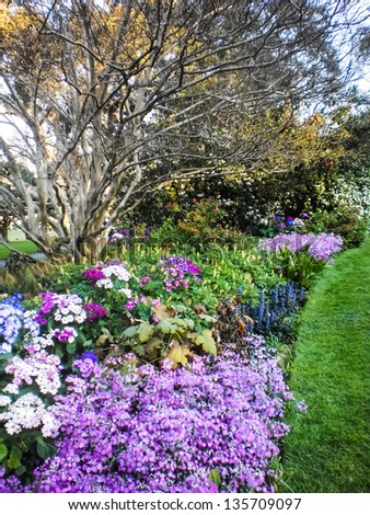 Beautiful flower garden at  Sydney botanic garden - stock photo