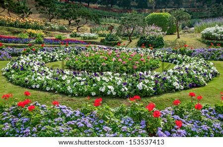 Beautiful flower in garden background - stock photo