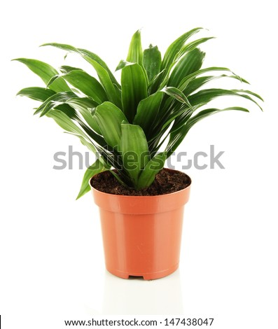 Beautiful flower in pot isolated on white - stock photo