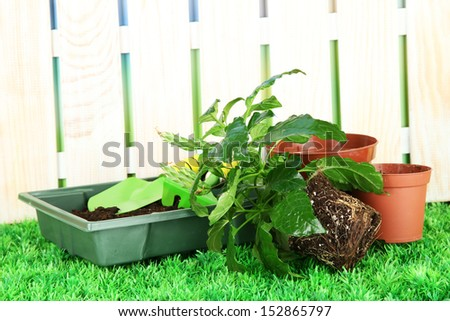 Beautiful flower in pot on grass in garden - stock photo