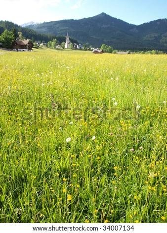 Beautiful flower meadow of village. - stock photo