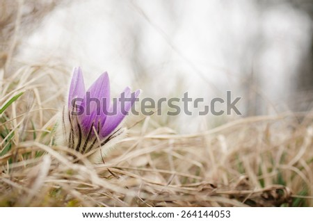 Beautiful flower on the meadow - stock photo