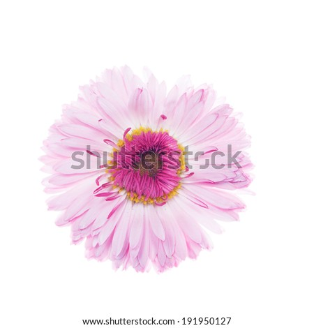 Beautiful flower on the white - stock photo