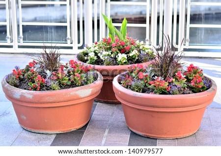 Beautiful flower pot - stock photo