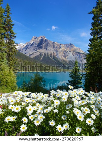 Beautiful flower surrounding Emerald Lake Banff National Park Canada - stock photo