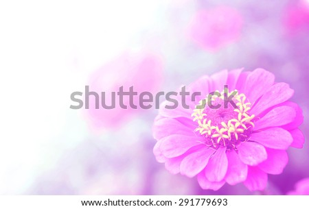 beautiful flower with Soft Focus Color Filters background - stock photo