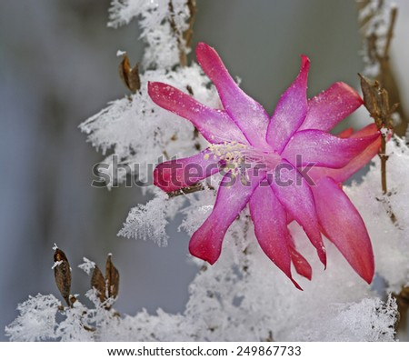 Beautiful flower with white snow - stock photo