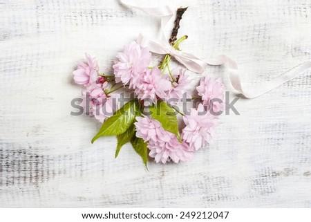Beautiful flowering almond (prunus triloba) on wooden background - stock photo