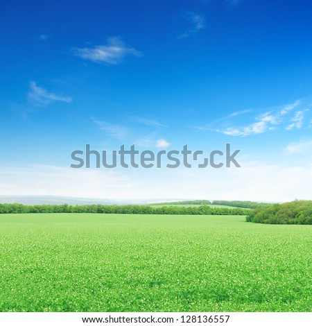 Beautiful flowering fields - stock photo