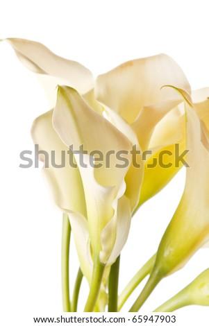 beautiful flowers - stock photo