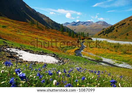 Beautiful flowers and mountains. Altay - stock photo