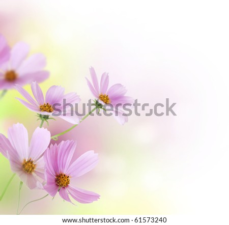 Beautiful Flowers Border.Floral design - stock photo