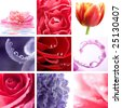 beautiful flowers collage of nine photos - stock photo