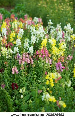 Beautiful flowers in a garden - stock photo