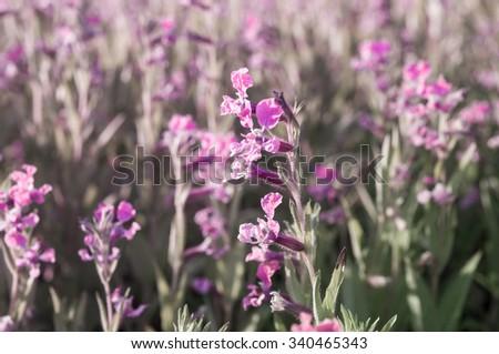 beautiful flowers in garden. - stock photo