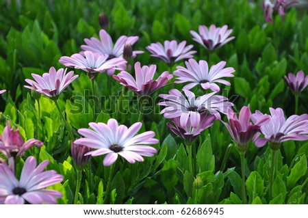 Beautiful flowers in green - stock photo