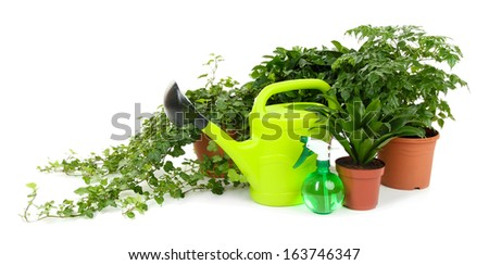 Beautiful flowers in pots isolated on white - stock photo
