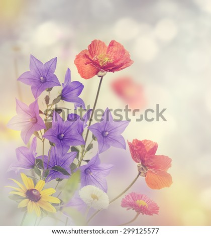 Beautiful Flowers in the Garden - stock photo