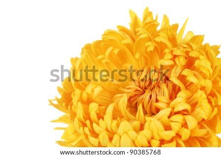 Beautiful flowers isolated on white - stock photo