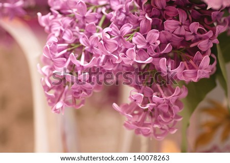 Beautiful flowers lilac - stock photo