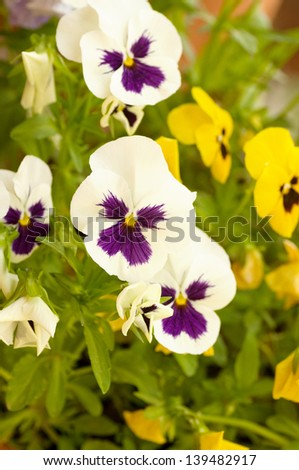 Beautiful flowers macro in garden - stock photo