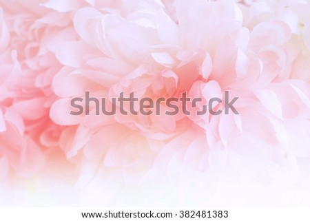 Beautiful flowers made with color filters in soft color and blur style for background - stock photo