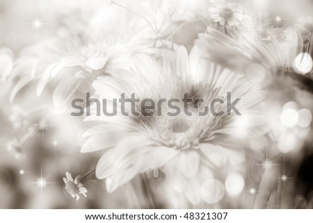 beautiful flowers made with soft black white filters - stock photo