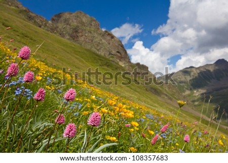 beautiful flowers on a mountain slope - stock photo
