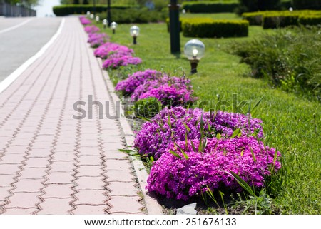 Beautiful flowers on city park in the summer - stock photo