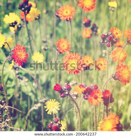 Beautiful flowers with instagram effect - stock photo